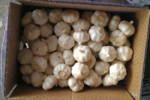 Fresh White Garlic (new crop) pictures & photos