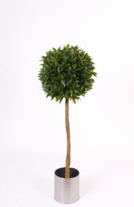 Natural Trunk Artificial Plants of Bay Tree pictures & photos