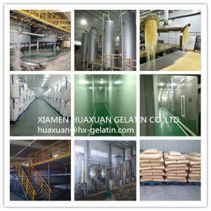 Best Quality Gelatin pictures & photos