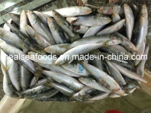 Good Quality Frozen Sardines Fish 14-16PCS/Kg pictures & photos