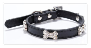 Collar for Dog pictures & photos