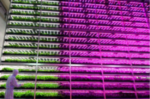Input AC100-240V High Quality LED Grow Lamp pictures & photos