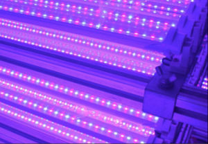 22W 1.2m Integrated LED Grow Tube Light pictures & photos