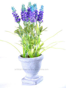 Artificial Colorful Lavender in Cement Urn for All Public Decoration pictures & photos