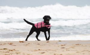 Wholesale Pet Products Dacron Dog Life Jacket pictures & photos
