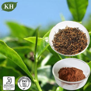High Quality Black Tea Extract Theaflavins 40%-75% pictures & photos