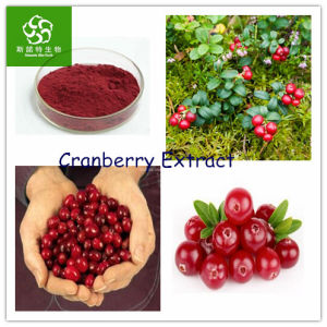 Cranberry Extract Proanthocyanidins 25%
