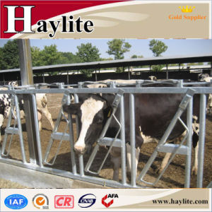 Hot Sale Daily Cow Selflocking Headlock for Cattle Farm pictures & photos