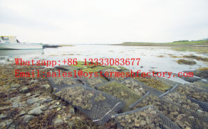 Oyster Grow-up Bag, Oyster Mesh Bags, Aquaculture Network pictures & photos