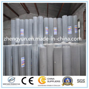 "1/2"" Hot DIP Galvanized Welded Wire Mesh pictures & photos"