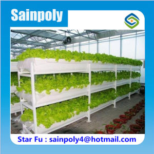 Professional Factory New Design Hydroponic Greenhouse for Vegetable pictures & photos