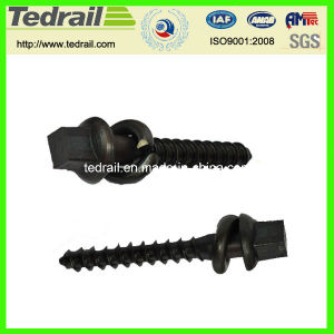 Ss Series Square Head Screw Spike pictures & photos