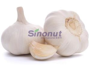 The Knoblauch of 5.0cm, 5.5cm, 6.0cm pictures & photos