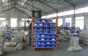 Export Good Quality Fresh Chinese Garlic 5.0cm and up pictures & photos