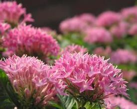 Rhodiola Rosea PE with High Quality pictures & photos