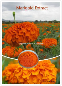 Lutein 5% to 90% Marigold Extract pictures & photos