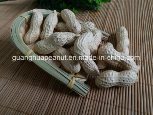 New Crop Best Quality Peanut in Shell pictures & photos