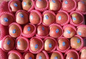 Fresh Qingguan Apple