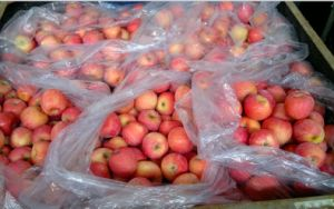 Chinese Fresh FUJI Apple, Hot Sale pictures & photos