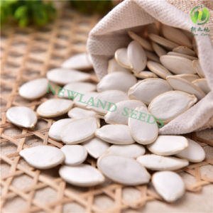 Green Snow White Pumpkin Seeds 11cm/12cm/13cm/14cm for Cook pictures & photos