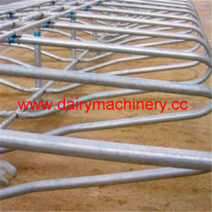 Galvanized Steel Pipe Cow Free Stall pictures & photos