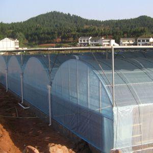 Low Cost Commercial Plastic Multi-Span Film Green House pictures & photos