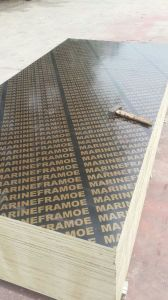 Film Faced Plywood / Marine Wood pictures & photos