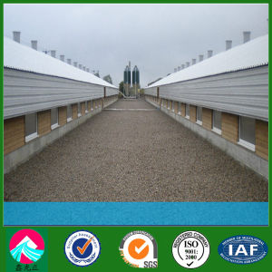 Modern Breeding Light Steel Structure Chicken House Farm (XGZ-PH012) pictures & photos