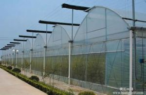 PC Sheet / Polycarbonate Greenhouse for Flower Growing with Constant Environment pictures & photos