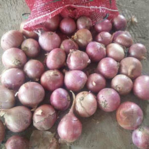 Export Standard Quality of Fresh Red Onion 5-7cm pictures & photos