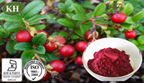 100% Natural Red Bilberry Extract: Anthocyanidins 10%, 15%, 20%, 25% (CAS No.: 84082-34-8) pictures & photos