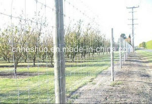 Factory Wholesale Galvanized Cattle Fence / Grassland Fence / Deer / Horse / Sheep pictures & photos