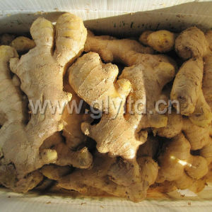 Regular Supplier of Chinese Air Dried Ginger pictures & photos