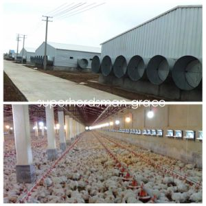 Steel Structure Broiler House Wth modern Production Poultry Equipment pictures & photos