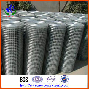 Hot Dipped Galvanzied Welded Wire Mesh pictures & photos