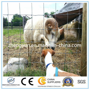 Fixed Knot Woven Wire Fence/Field Fence (Factory) pictures & photos