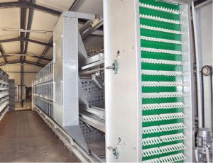 Automatic Chicken Poultry Cage Farm Equipment for Breeder (H frame) Poul Tech pictures & photos