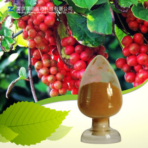 100% Natural High Quality Schisandra Extract Schisandrin pictures & photos