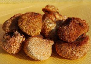 Hericium Erinaceus Extract, Polysaccharide 40%-50%, Hericium Erinaceus Extract Powder pictures & photos