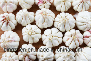 New Crop Top Quality Chinese Fresh Purple Garlic Low Price pictures & photos