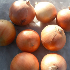 New Crop Yellow Onion for Exporting pictures & photos