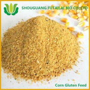 Corn Gluten Feed for Animal Feed