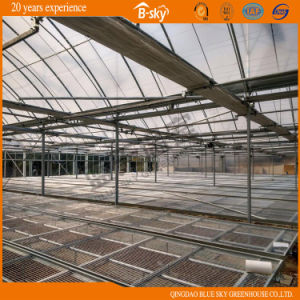 Popular Plastic Film Greenhouse pictures & photos