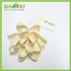 Natural Sola Flower for Reed Diffuser pictures & photos