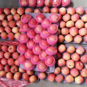 Crisp Sweet Red FUJI Apple pictures & photos