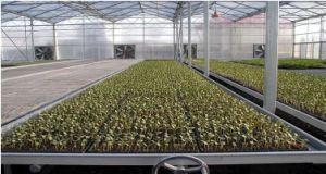 Customized High Quality Polycarbonate Sheet Agricultural Greenhouses pictures & photos