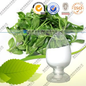 High Quality Common Andrographis Herb Extract Andrographolide pictures & photos
