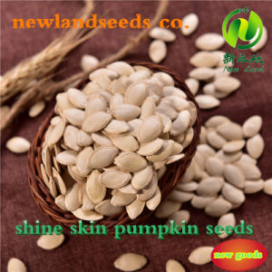 Inner Mongolia Shine Skin Pumpkin Seeds for Sale pictures & photos