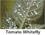 High Effect 1% Wg Compound Insecticide Bifenthrin Clothianidin Synergistic Agent Pesticide pictures & photos