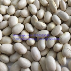 Flat Type Food Grade White Kidney Bean pictures & photos